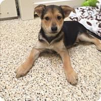 Adopt A Pet :: Marla - Thousand Oaks, CA