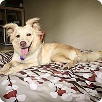 Adopt A Pet :: TEGAN - Fort Worth, TX