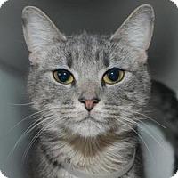 Adopt A Pet :: Diana - New York, NY