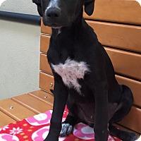 Adopt A Pet :: Jenny - Modesto, CA