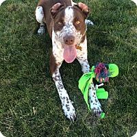 Adopt A Pet :: Penny - Boise, ID