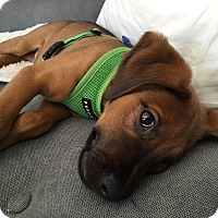 Adopt A Pet :: Taylor Hawkins - Jersey City, NJ