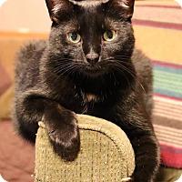 Adopt A Pet :: Murphy - Rochester, MN