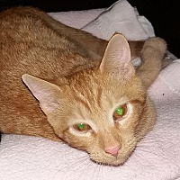 Adopt A Pet :: Krimpet - Lenhartsville, PA