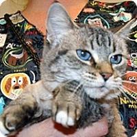 Adopt A Pet :: Miew Miew - Wildomar, CA