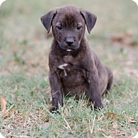 Adopt A Pet :: Trooper $250 - Seneca, SC