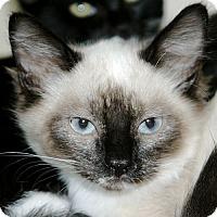 Adopt A Pet :: Blue - Port Angeles, WA