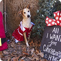 Adopt A Pet :: Folly - Bishopville, SC