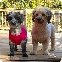 Adopt A Pet :: Emerson and Lake - Brownsboro, AL