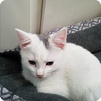 Adopt A Pet :: Lexus - Greensburg, PA