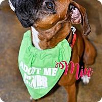 Adopt A Pet :: Mia - Woodinville, WA
