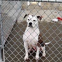 Adopt A Pet :: Demi - Greensboro, MD