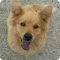 Adopt A Pet :: Ella - Blackstock, ON