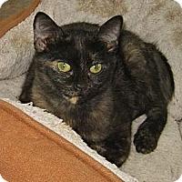 Adopt A Pet :: Nebula - Kansas City, MO