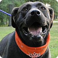 Adopt A Pet :: Maggie May - Lewisville, IN