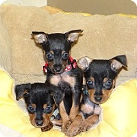 Adopt A Pet :: Princess and her babies - Marlton, NJ