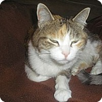 Adopt A Pet :: Penny - Laguna Woods, CA