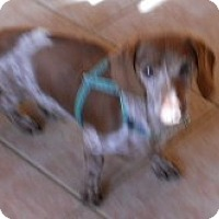 Adopt A Pet :: Hans - dewey, AZ