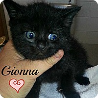 Adopt A Pet :: Gionna - La Follette, TN