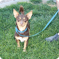 Adopt A Pet :: Reese - California City, CA