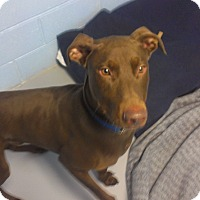 Adopt A Pet :: Chester - Muskegon, MI