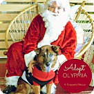 Adopt A Pet :: Olympia Dukakis is a DREAM!