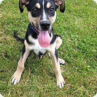 Adopt A Pet :: Rascal - Charlestown, RI