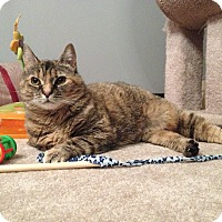 Adopt A Pet :: Penny - Mount Clemens, MI