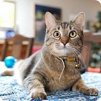 Adopt A Pet :: Princess - Manhattan, KS