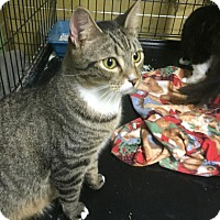 Adopt A Pet :: Junior - Coral Springs, FL