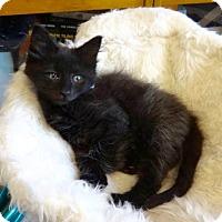 Adopt A Pet :: Cookie Monster -Adopt Pending! - Colmar, PA