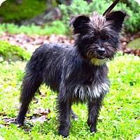 Adopt A Pet :: JoJo - Penngrove, CA