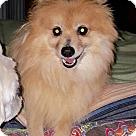 Adopt A Pet :: Marie