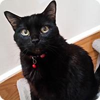 Adopt A Pet :: B - Toronto, ON