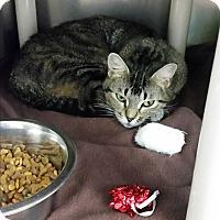 Adopt A Pet :: Kiera - Chippewa Falls, WI