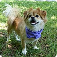 Adopt A Pet :: Bud Bud - Mocksville, NC