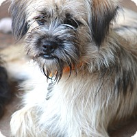 Adopt A Pet :: Ginnie - Woonsocket, RI
