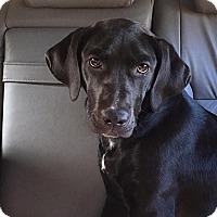 Adopt A Pet :: Georgia - Trenton, NJ
