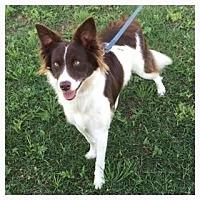 Adopt A Pet :: Nellie - Allen, TX
