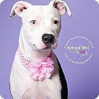 Adopt A Pet :: Penelope - Apache Junction, AZ