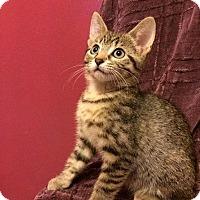 Adopt A Pet :: Ryder - Charlotte, MI