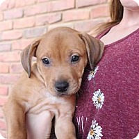 Adopt A Pet :: Selina - Los Banos, CA