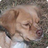 Adopt A Pet :: Jasmine - Maynardville, TN