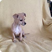 Adopt A Pet :: freddie - Shannon, GA