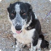 Adopt A Pet :: Jemma - Burlington, VT
