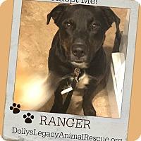 Adopt A Pet :: RANGER - Lincoln, NE