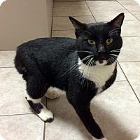 Adopt A Pet :: Jack - Warrenton, MO