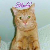 Adopt A Pet :: Mocha - York, PA