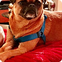 Adopt A Pet :: Jewels - Mary Esther, FL