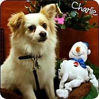 Adopt A Pet :: Charlie - Ogden, UT